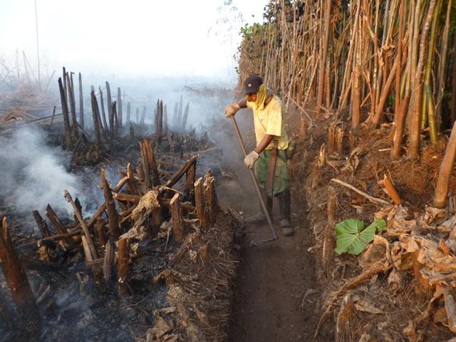 426 em uma semana: Ibama pede ajuda para combater focos de incêndio no AP