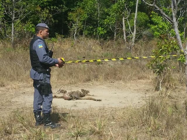 Mais um corpo para a polícia investigar