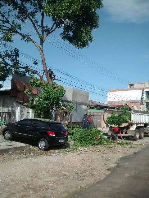 Empreendimento: Derrubada de árvore com 40 anos gera polêmica no Centro