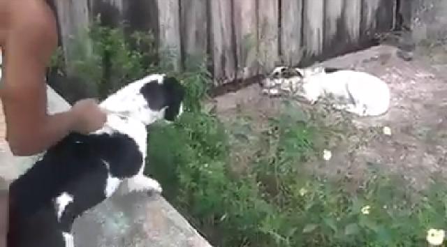 Maus tratos: VÍDEO mostra dono incentivando ataque de seu pitbull