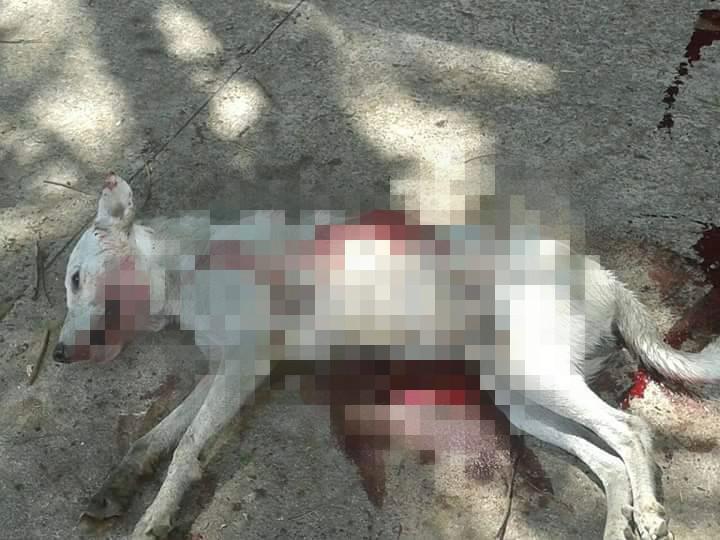 De novo: Homem mata cachorro a tiros na frente de crianças