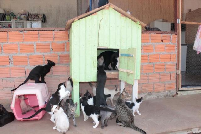 Solidariedade: ONG oferece animais para adoção