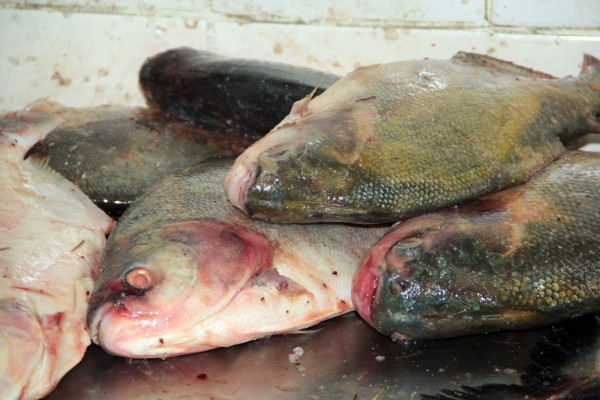 Semana Santa: Pescap divulga tabela de preços do pescado