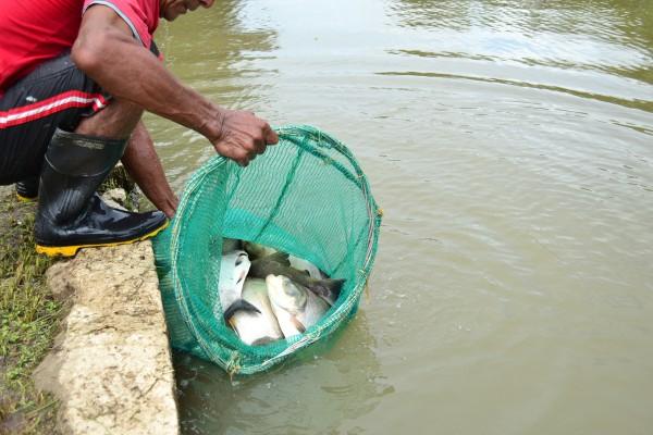Uma tonelada de peixes: Dia do Trabalhador tem pescaria na praça