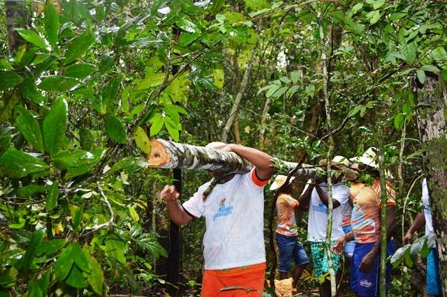 Ciclo do Marabaixo: Comunidades tradicionais entram na floresta para retirada do mastro