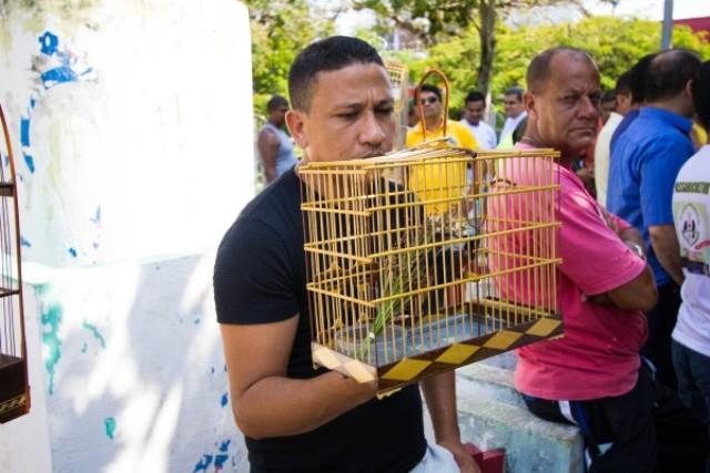 Cultura amazônica: Criadores de pássaros querem se organizar