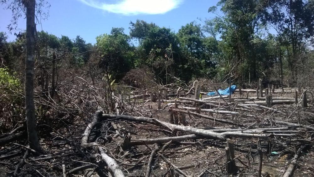 Zona Oeste: Invasores desmatam área equivalente a 3 campos de futebol no Marabaixo
