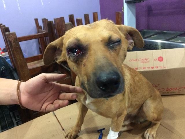 Costelinha: Cachorro apanha de ex-lutador de MMA até desmaiar