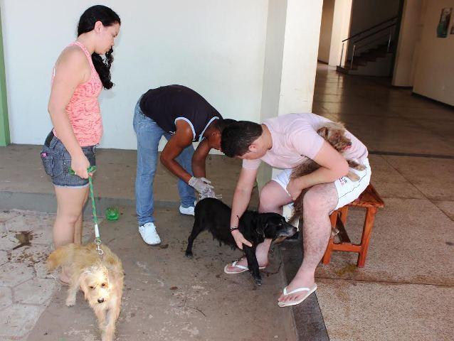 Campanha: Sábado é dia de vacinar cães e gatos