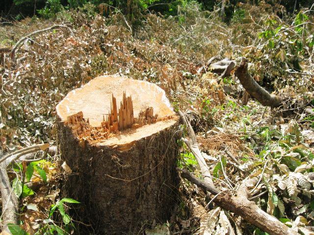 Alerta: Mais da metade das espécies de árvores podem desaparecer da Amazônia