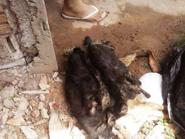 Macabro: 7 gatos são mortos em possível vingança