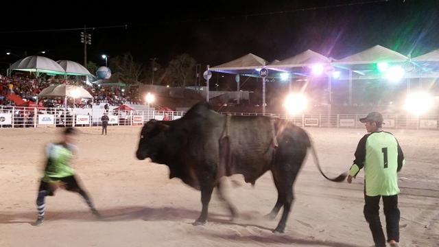"""Rebelde: Touro dá """"canseira"""" em equipe do rodeio; veja o VÍDEO"""