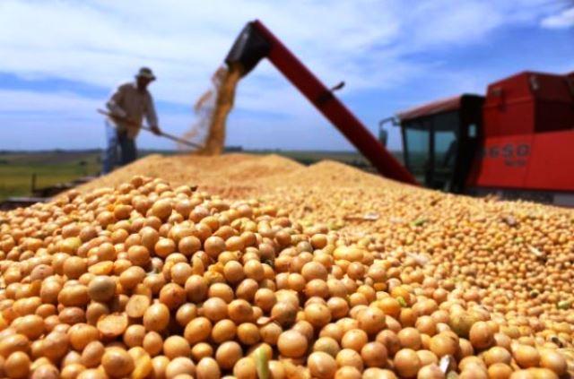 Produção de grãos no Amapá tem alta de 26%