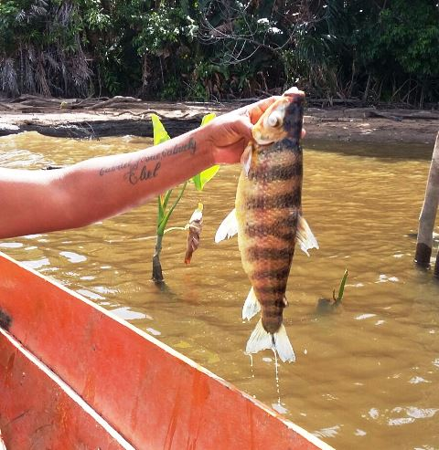 Imap divulga laudo sobre morte de peixes na quarta-feira, 27