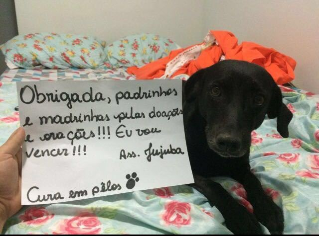 Drama da cadela Jujuba mobiliza internautas dentro e fora do Brasil