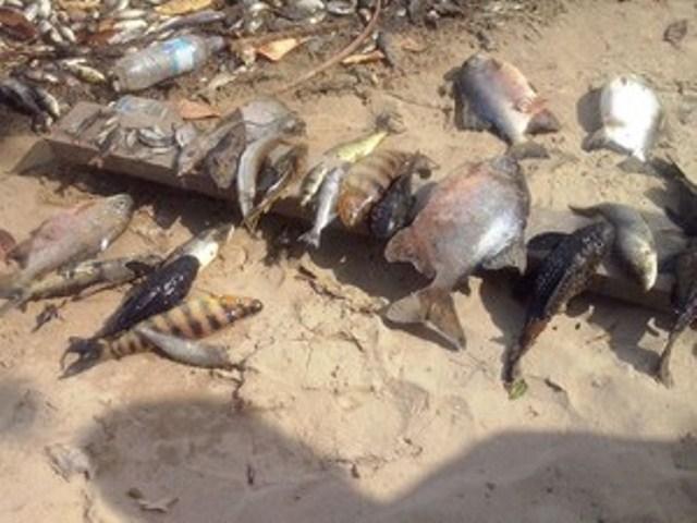 Nova mortandade de peixes é registrada, agora perto da Cachoeira Caldeirão