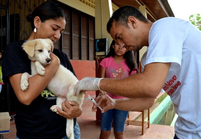 Após caso de raiva, técnicos fazem bloqueio vacinal