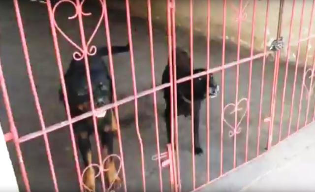 ONG denuncia maus tratos a animais do canil da Guarda Municipal