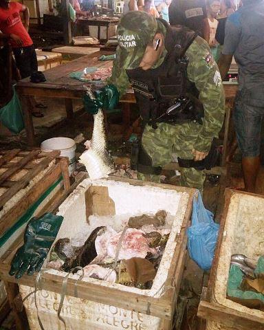 Carne de jacaré era vendida em feira