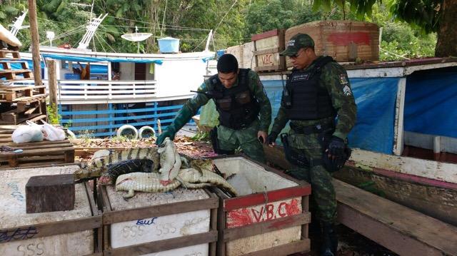 Batalhão Ambiental apreende 61 quilos de carne de jacaré