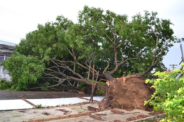 Ventania causa destruição em Macapá
