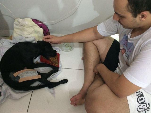 70 animais são atropelados por mês em Macapá