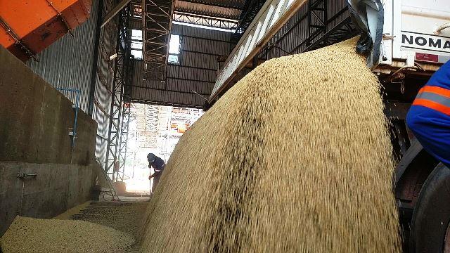 Produtores do Mato Grosso começam a usar o Porto de Santana em 80 dias