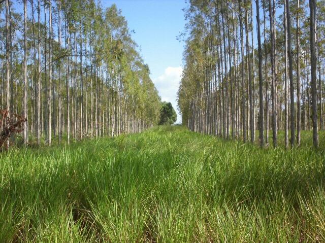 Especialistas discutem agricultura de baixo carbono
