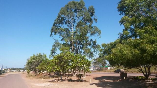 Moradores questionam retirada de árvores para ampliação da Duca Serra