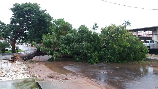 Após 12h de chuva, árvore cai, mas há poucos alagamentos