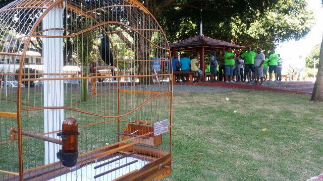 De 7 mil criadores de pássaros, apenas 400 são registrados, diz Sema