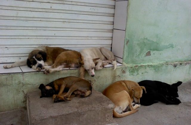 Centro de zoonoses vai combater superpopulação de animais de rua