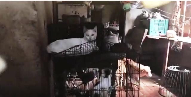 Mulher mantinha animais em condições degradantes, ASSISTA