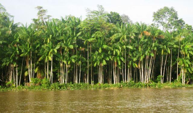 Pesquisadores do AP revelam que povos antigos moldaram a Amazônia