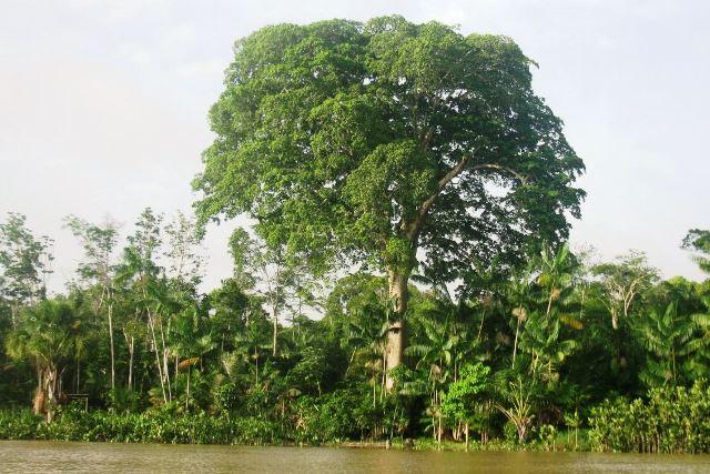 Florestas do Amapá 'limpam' 10 milhões de toneladas de CO2 da atmosfera