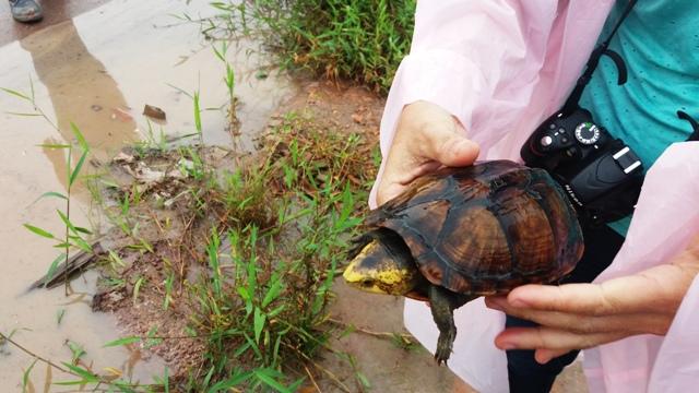 Em limpeza de rua, até tartaruga é encontrada