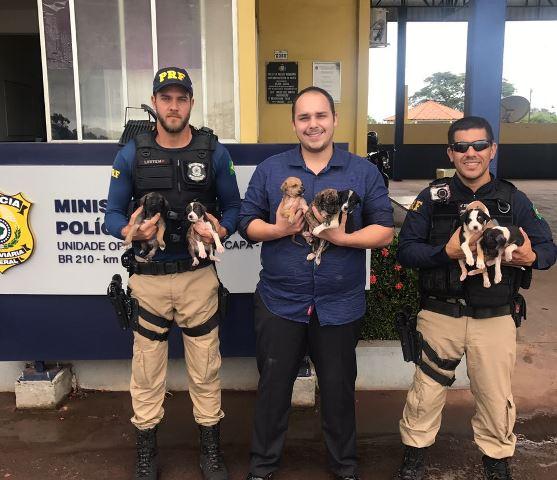 ONG recebe filhotes resgatados por policiais rodoviários