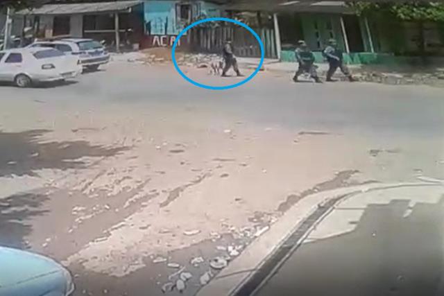 PM que atirou em cachorro é inocentado em inquérito policial
