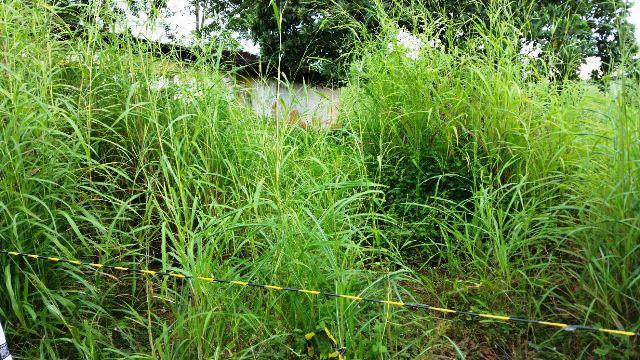 Corpo de possível mototaxista é encontrado em matagal