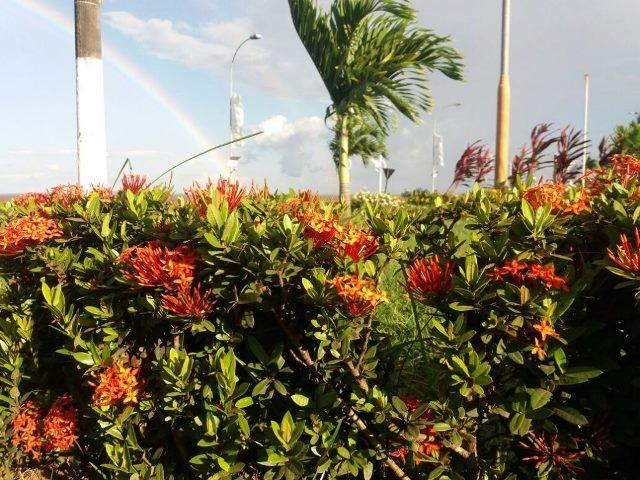 """Em Macapá, plantas e grama estão """"sumindo"""" dos canteiros"""