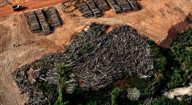 Madeira de Belo Monte vai recuperar passarelas onde moram 40 mil famílias