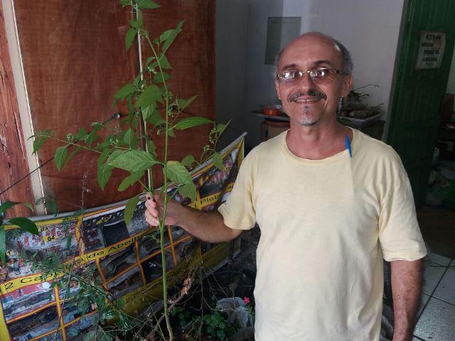Grupo quer estimular o consumo das plantas comestíveis