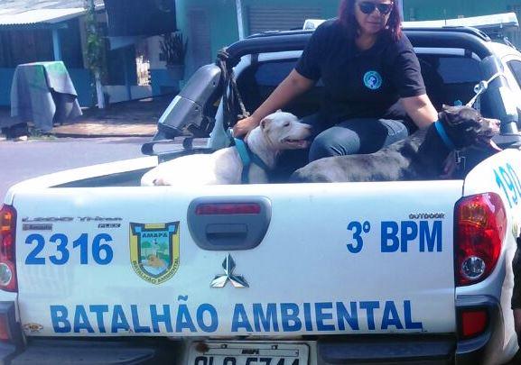 Sem água e comida, pitbulls abandonados são resgatados
