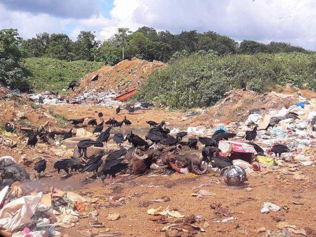 Odor de peixe podre e lixo invadem a cidade de Oiapoque