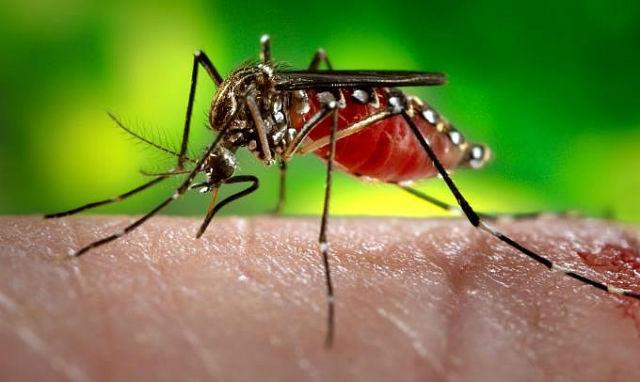 Amapá tem 7 cidades em situação de alerta para dengue, zika e chikungunya