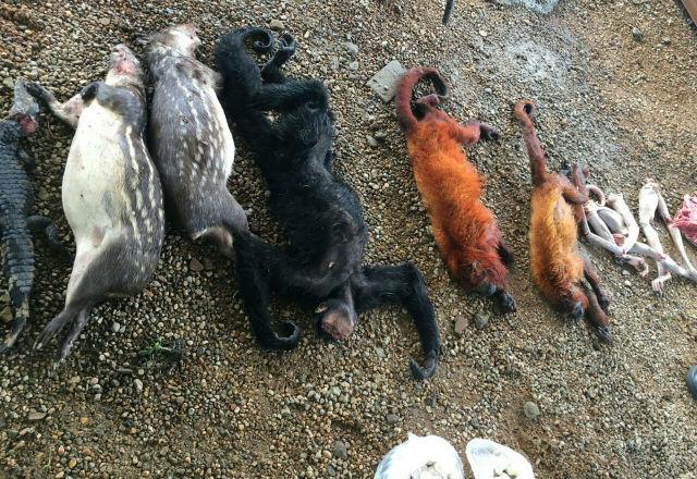 Cinco pessoas são presas em caça proibida no Parque do Tumucumaque