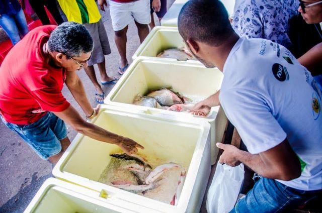 Pescado é alternativa para empreendedorismo no AP, diz agência