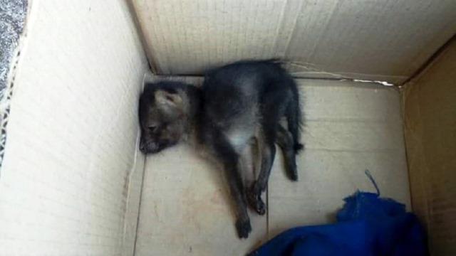 Motorista encontra filhote de raposa junto com a carga