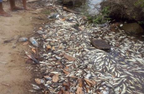 Mortandade no Araguari completa 3 anos sem indenização a pescadores
