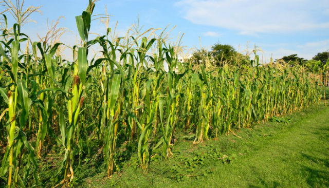 Pela primeira vez, AP é incluído em estudo de plantio do Ministério da Agricultura